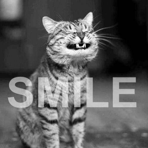 Smile (cat)